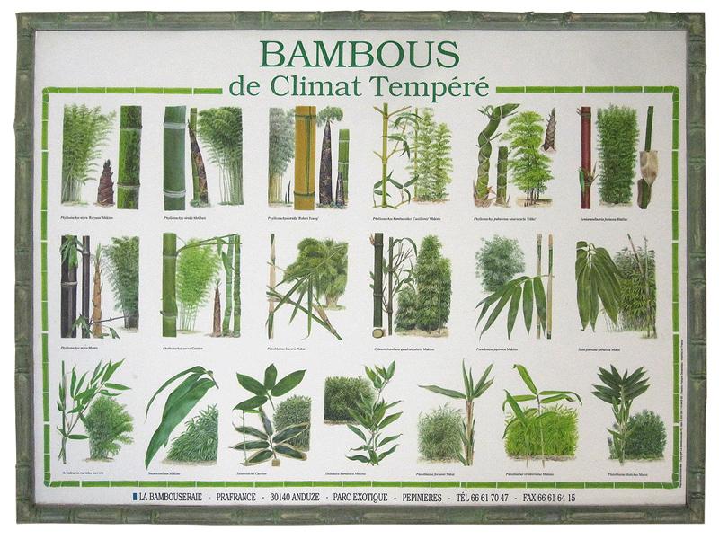 Asien - Bambusrahmen